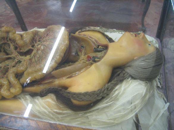 Анатомический музей La Specola во Флоренции (Италия)