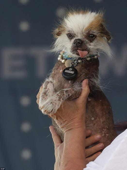 Конкурс Самая уродливая собака в мире 2018 (Worlds Ugliest Dog 2018)