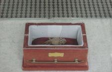 Рогатая ящерица Олд Рип (или Старый Рип) в бархатном ящике на обозрении публики