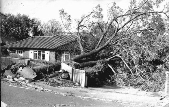 Charing Cross Storm Tree: памятник погибшим деревьям в Лондоне