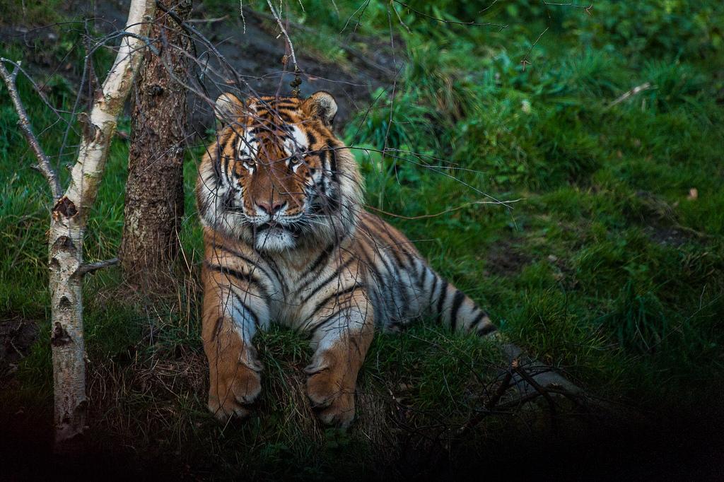 Вот такие новости из дублинского Зоопарка.