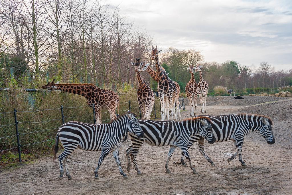 Весеннее пополнение и у жирафов в семействе!