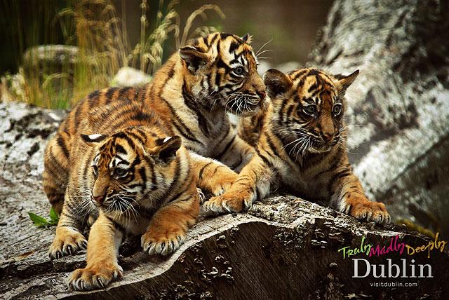 Дублинский зоопарк(Dublin Zoo) - это развлечение для всей семьи.