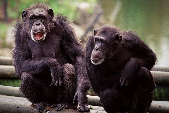 Дублинский зоопарк - это развлечение для всей семьи.