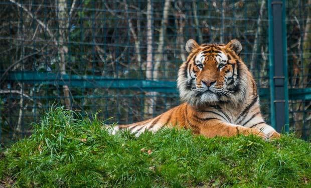 Dublin-zoo-2015-66665