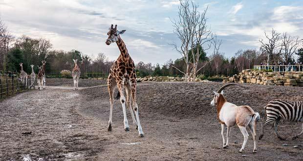 Зоопарк в Дублине.