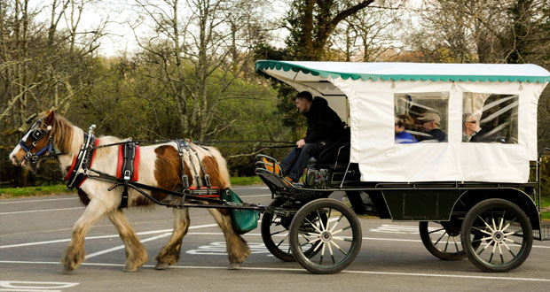 Конное такси в графстве Керри