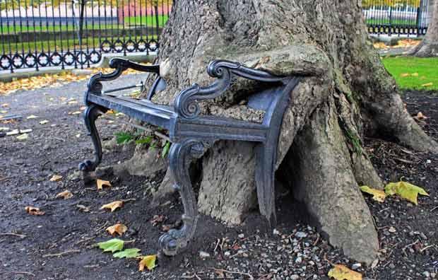 Дерево, поедающее скамейку.
