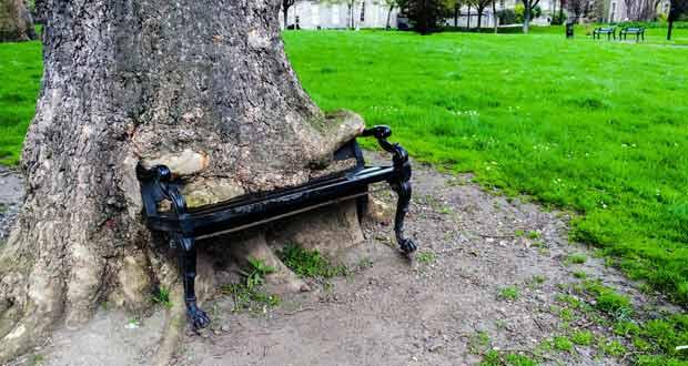 Голодное дерево в Дублине