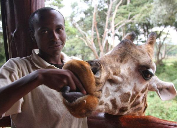 Центр жирафов