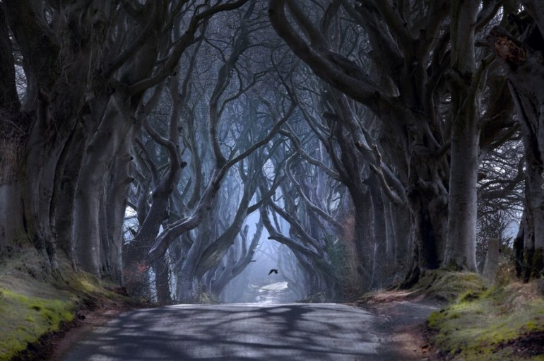 темные аллеи Ирландии